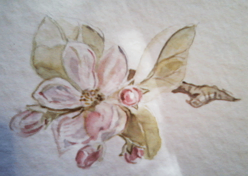 Blossom-watercolours-2