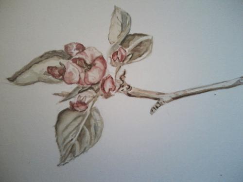 Blossoms-watercolour